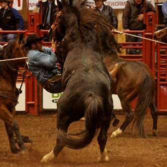 Black Hills Stock Show® Ranch Rodeo Field Set