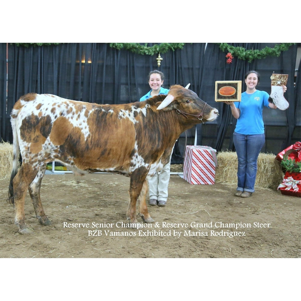 2016 Reserve Grand Champion Steer