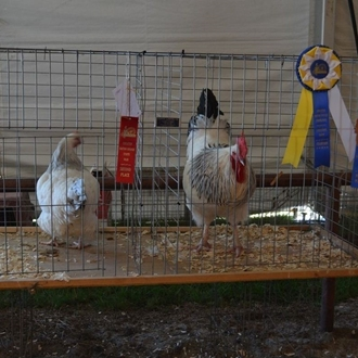 2013 Agriculture/Livestock Shows