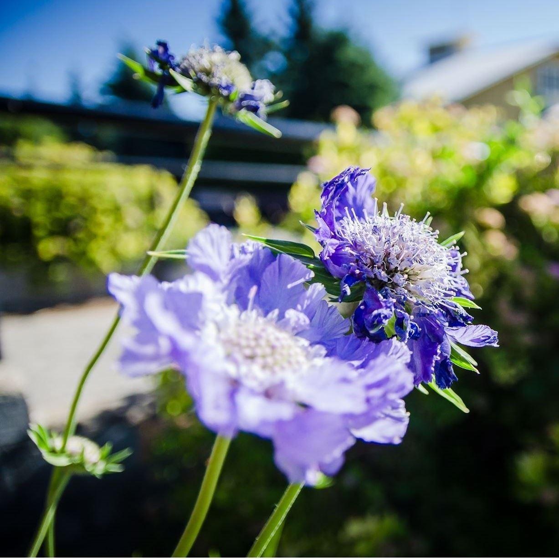 Open Floriculture