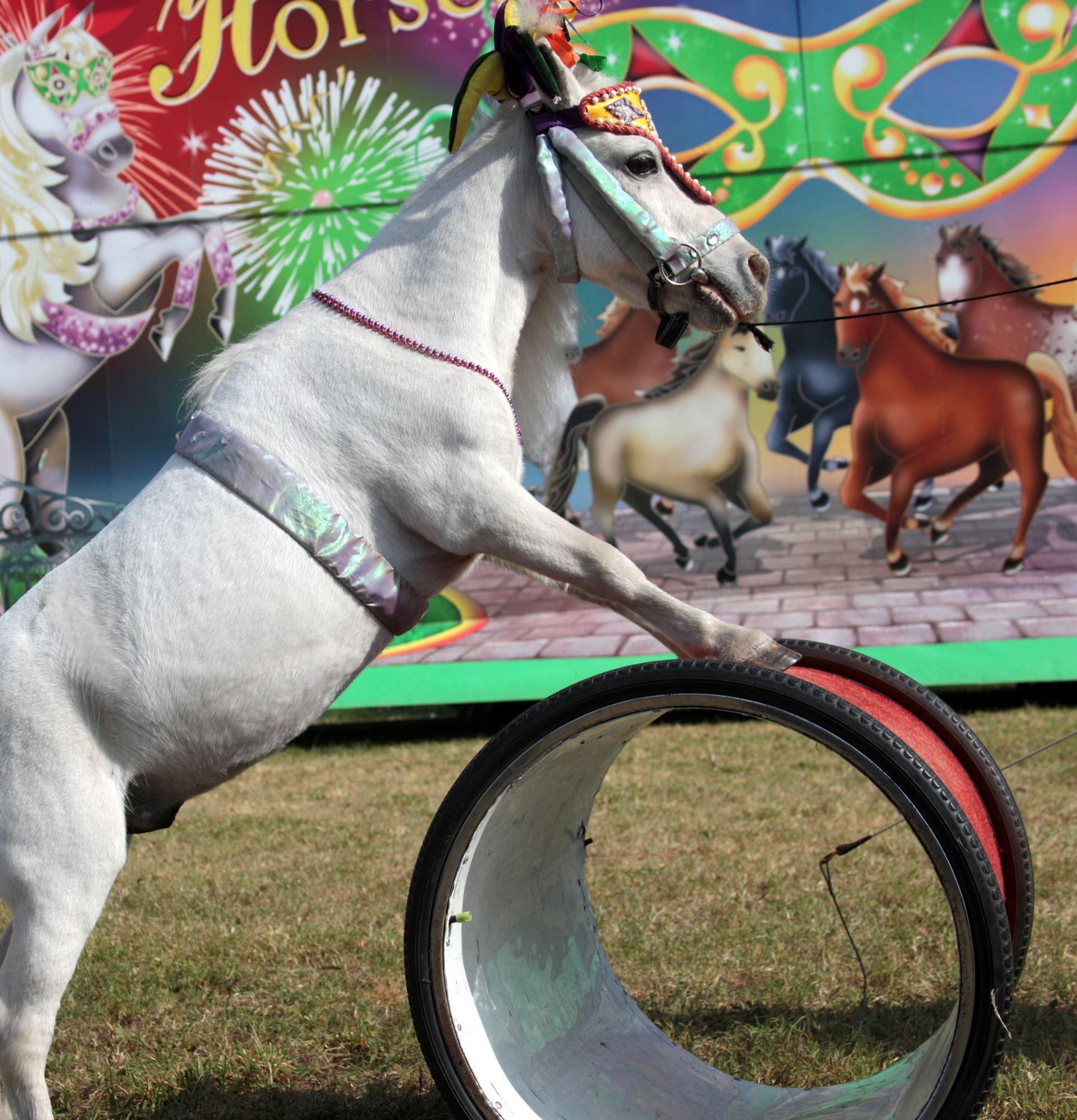 Horses Horses Horses Show